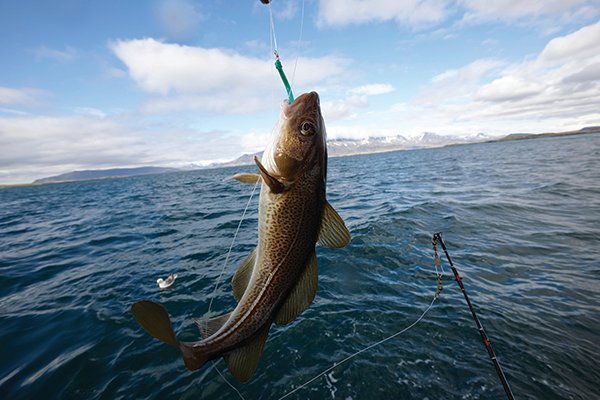 Charters reel in a boatload of fish